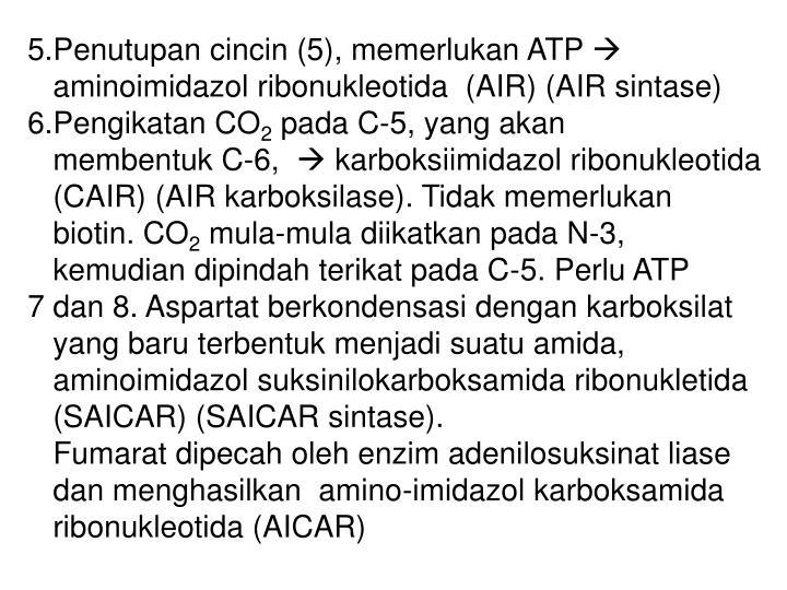 5.Penutupan cincin (5), memerlukan ATP