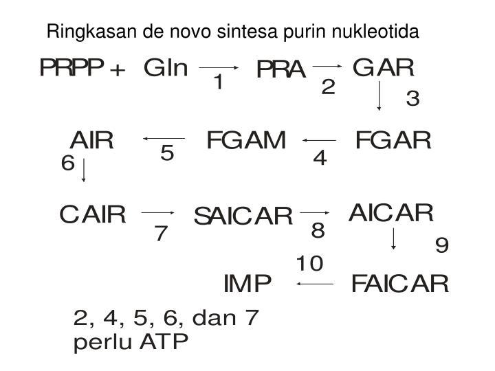 Ringkasan de novo sintesa purin nukleotida