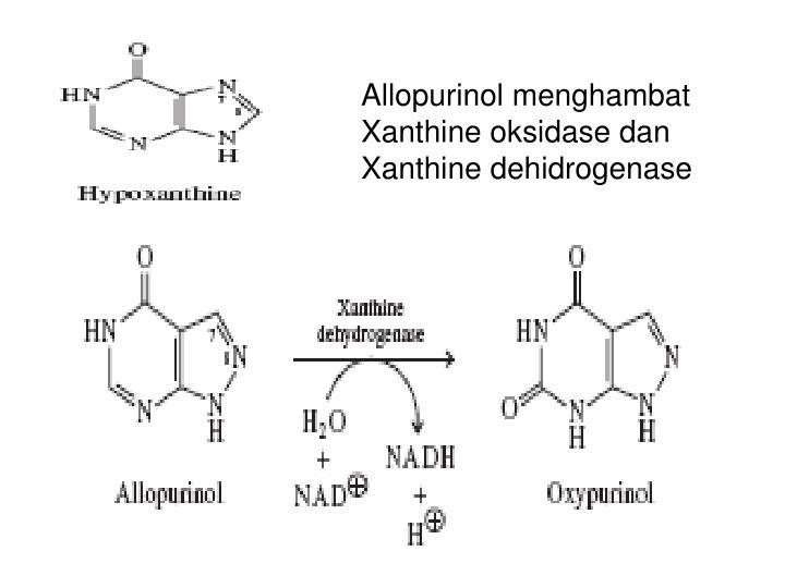 Allopurinol menghambat