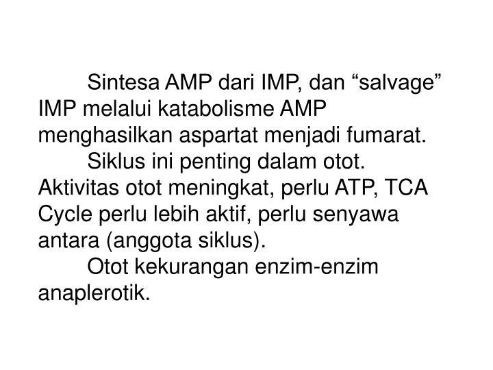 "Sintesa AMP dari IMP, dan ""salvage"" IMP melalui katabolisme AMP menghasilkan aspartat menjadi fumarat."