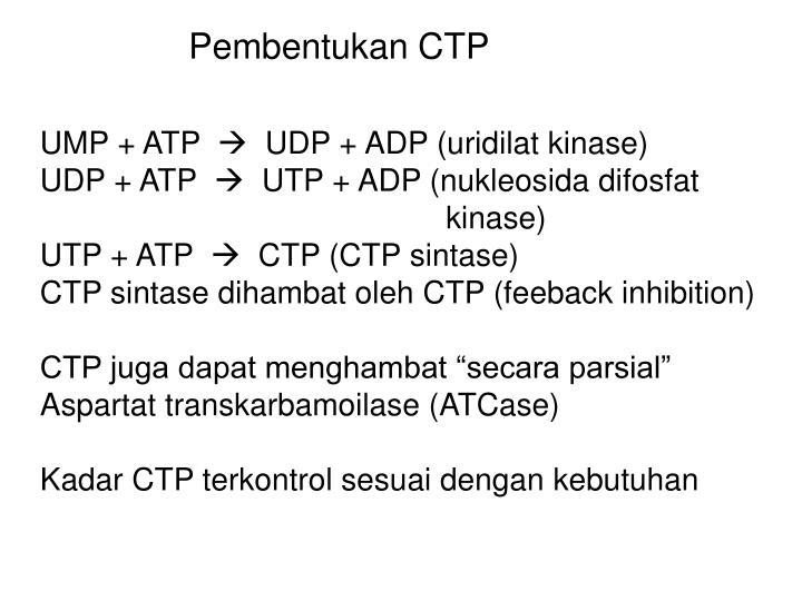 Pembentukan CTP