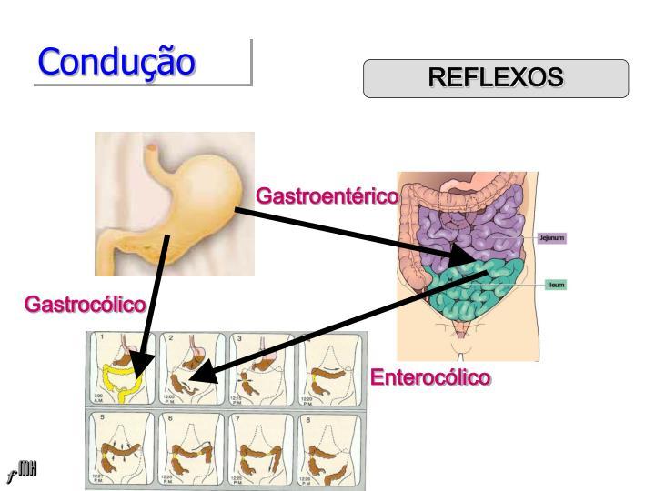 Gastroentérico
