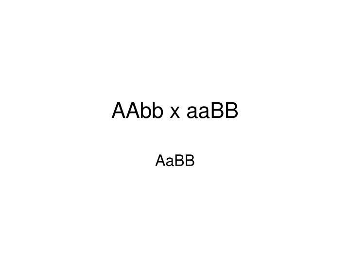 AAbb x aaBB