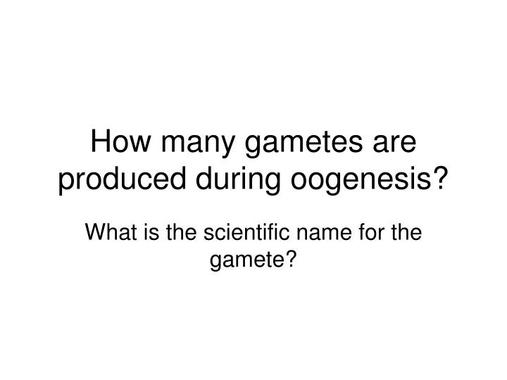 How many gametes are produced during oogenesis?