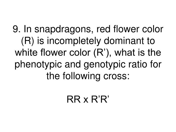 9. In snapdragons, red flower color (R) is incompletely dominant to white flower color (R'), what is the phenotypic and genotypic ratio for the following cross: