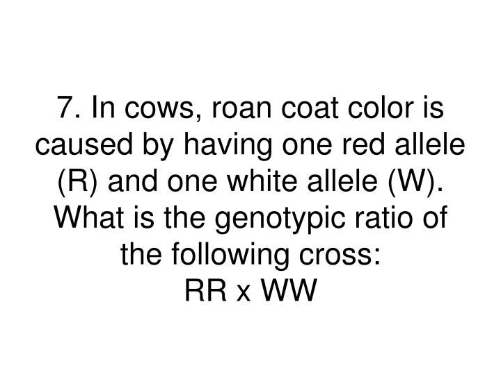 7. In cows, roan coat color is caused by having one red allele (R) and one white allele (W). What is the genotypic ratio of the following cross: