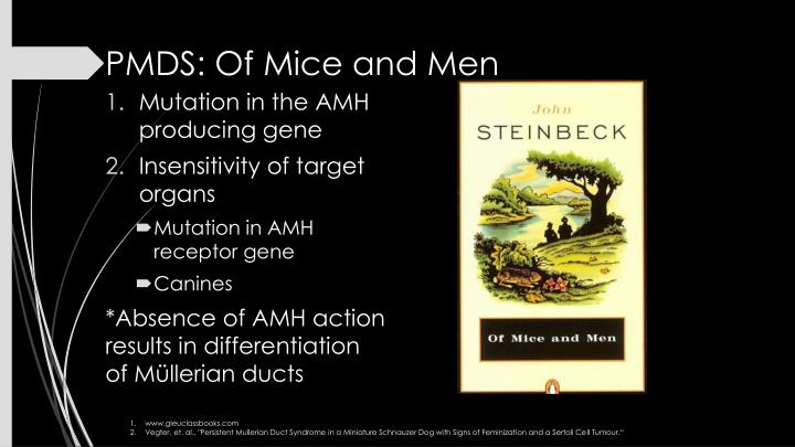 PMDS: Of Mice and Men