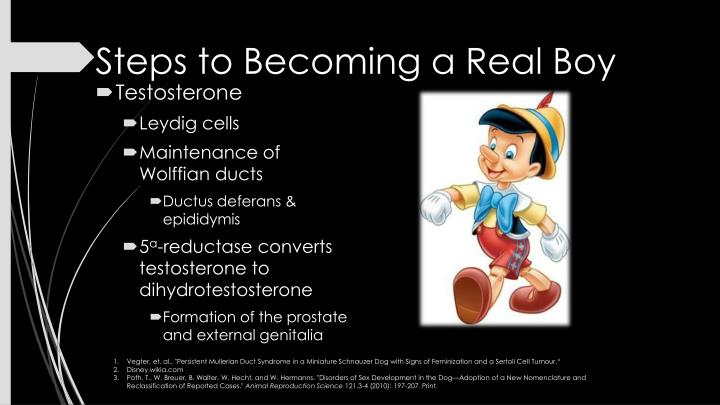Steps to Becoming a Real Boy