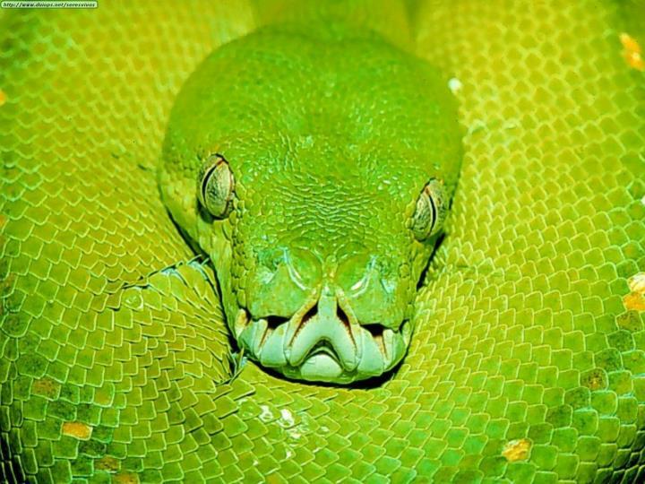 La Serpiente Verde