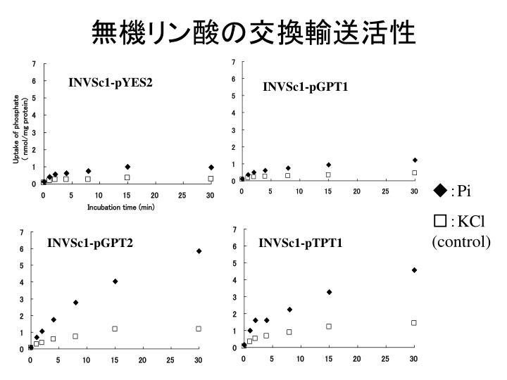 無機リン酸の交換輸送活性