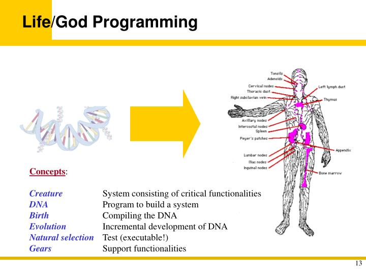 Life/God Programming