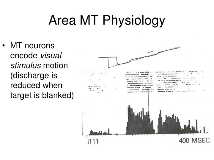 Area MT Physiology