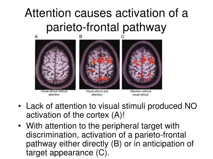 Attention causes activation of a parieto-frontal pathway