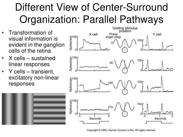 Different View of Center-Surround Organization: Parallel Pathways