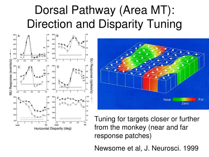 Dorsal Pathway (Area MT): Direction and Disparity Tuning