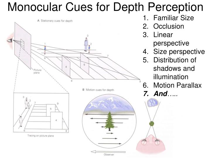 Monocular Cues for Depth Perception