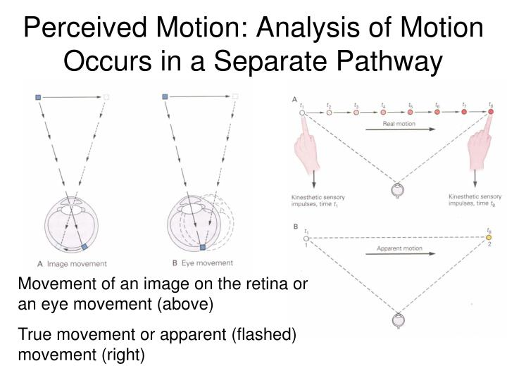 Perceived Motion: Analysis of Motion Occurs in a Separate Pathway