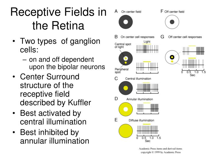 Receptive Fields in the Retina