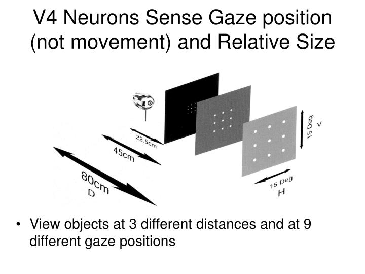 V4 Neurons Sense Gaze position (not movement) and Relative Size