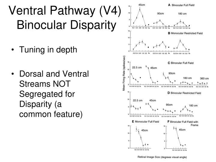 Ventral Pathway (V4): Binocular Disparity
