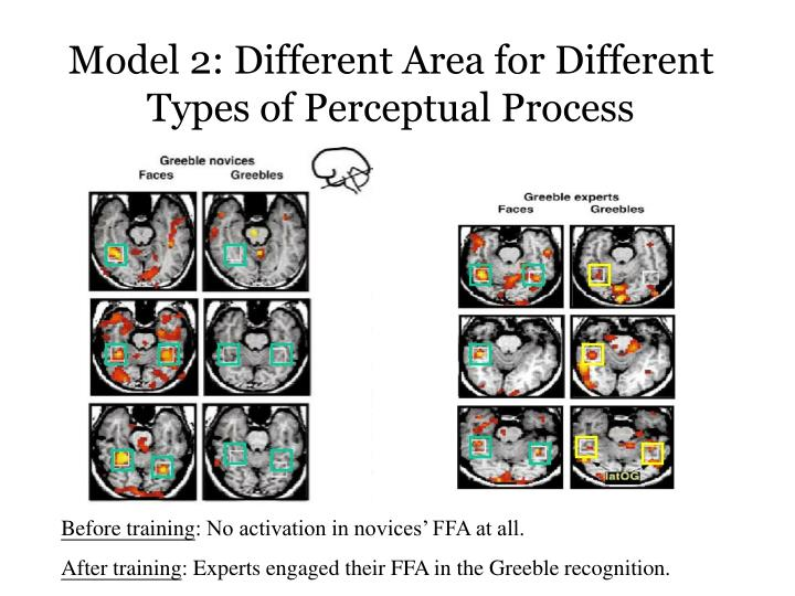 Model 2: Different Area for Different Types of Perceptual Process