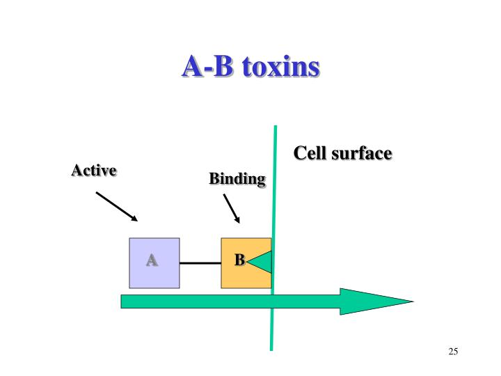 A-B toxins