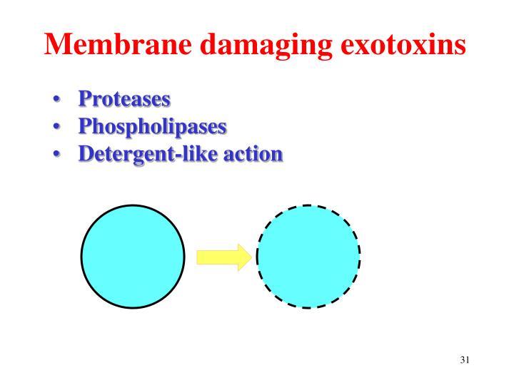 Membrane damaging exotoxins