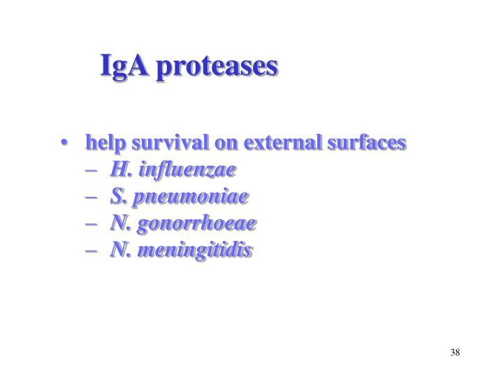 IgA proteases