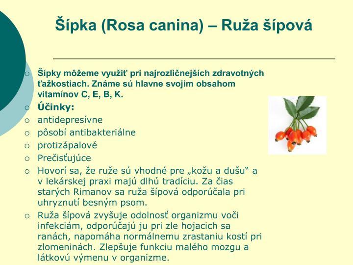 Šípka (Rosa canina) – Ruža šípová