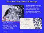 larsen ice shelf under a microscope