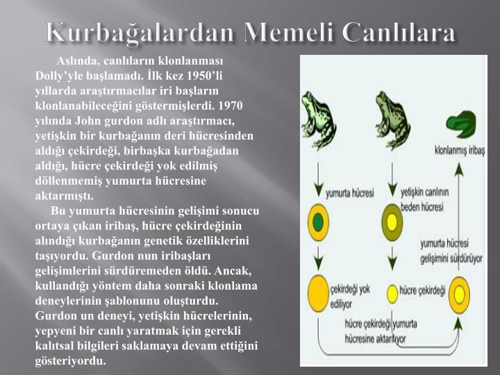 Kurbağalardan Memeli Canlılara