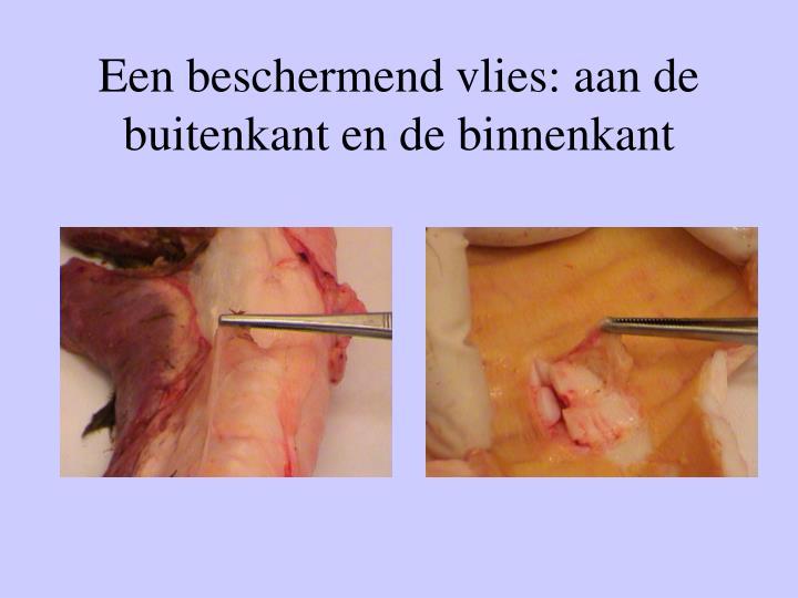 Een beschermend vlies: aan de buitenkant en de binnenkant