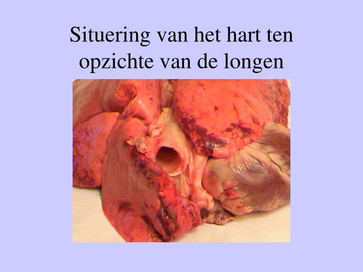 Situering van het hart ten opzichte van de longen