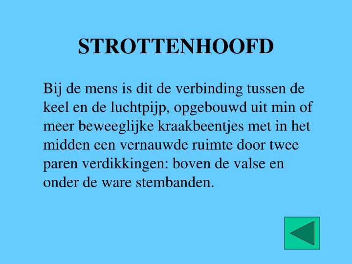 STROTTENHOOFD