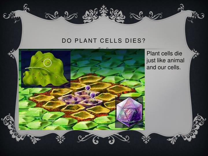 Do plant cells dies?