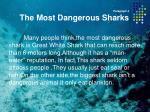 paragraph 4 the most dangerous sharks