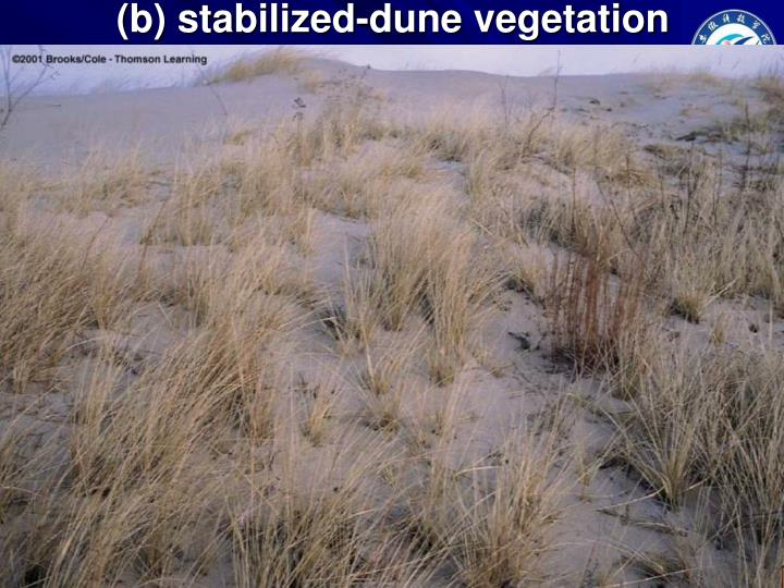 (b) stabilized-dune vegetation