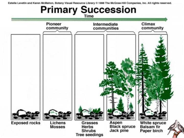 Primary Terrestrial Succession