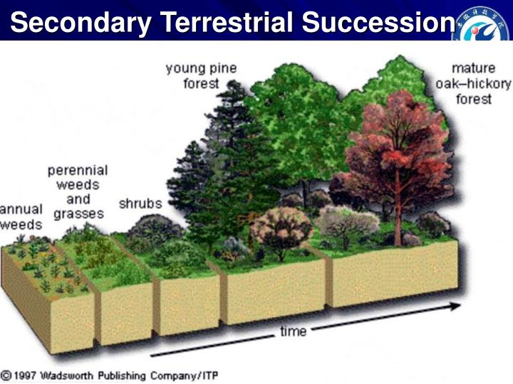 Secondary Terrestrial Succession