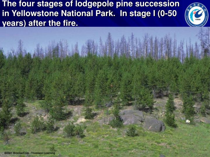 The four stages of lodgepole pine succession in Yellowstone National Park.  In stage I (0-50 years) after the fire.