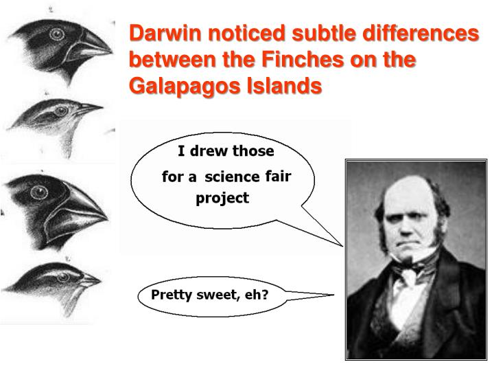 Darwin noticed subtle differences between the Finches on the Galapagos Islands