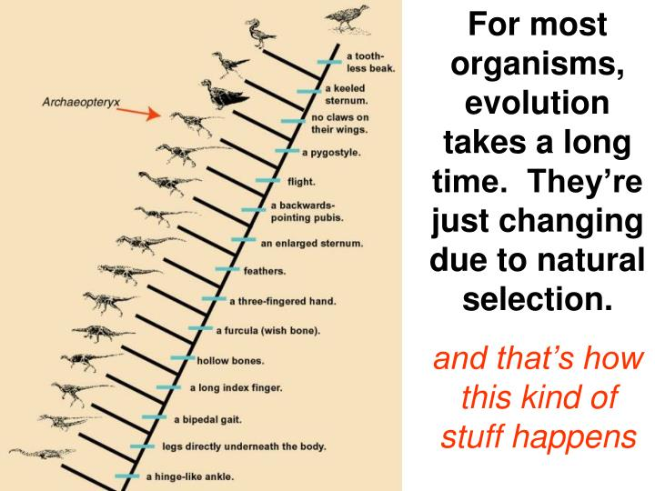 For most organisms, evolution takes a long time.  They're just changing due to natural selection.