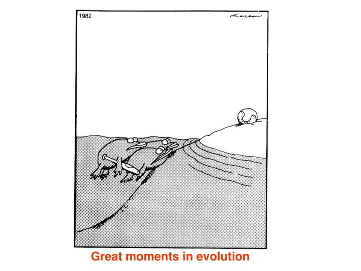 Great moments in evolution