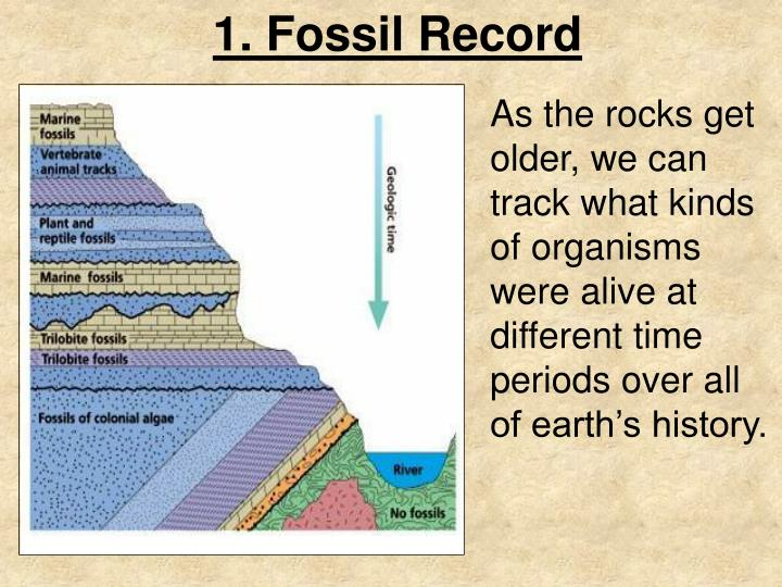 1. Fossil Record