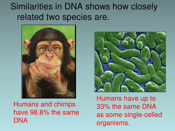 Similarities in DNA shows how closely related two species are.