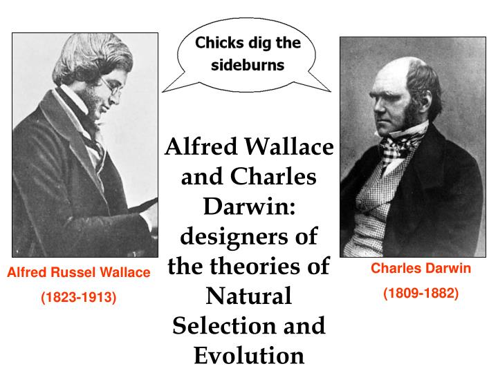 Alfred Wallace and Charles Darwin: designers of the theories of Natural Selection and Evolution