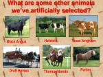 what are some other animals we ve artificially selected
