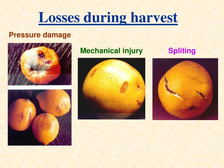 Losses during harvest