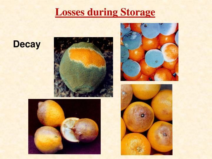 Losses during Storage