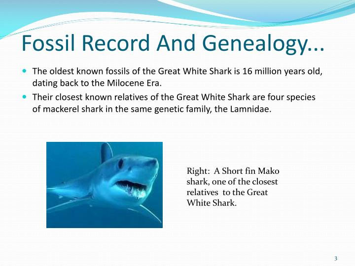Fossil record and genealogy